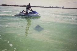 Dolphin Tour vor Fort Myers Beach