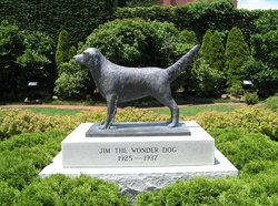 Wonder Dog Memorial Garden