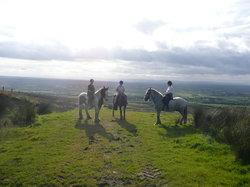Sheans Horse Farm