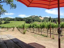 Ravenswood Winery