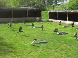 The Falconry Centre