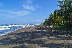 The Untamed Beach