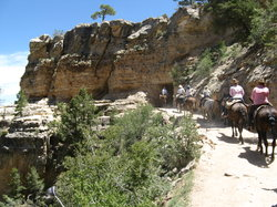 Grand Canyon Mule Tours by Xanterra