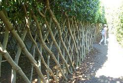 Natural lattice