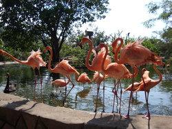 Zoologico de Vallarta