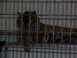 Ehime Tobe Zoo