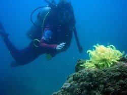 海南潜水 ダイビング講習