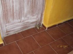 Example of crabs trying to get in the rooms