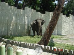 马尼拉动物园