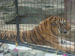 阿必伦动物园