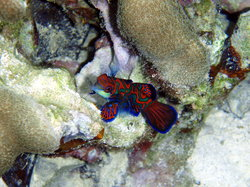 Mandarin Fish Lake