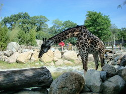 Roger Williams Park Zoo