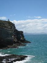 Dunedin Albatros Kolonie (27304826)