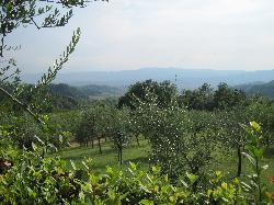 View from the farmhouse of the vineyards