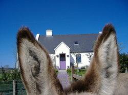 Clondanagh Cottage