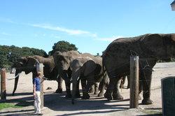 Monterey Zoo