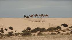 Camellos (28064835)