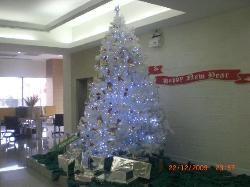 RECEPTION AREA - CHRISTMAS TREE
