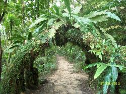 Forest walk behind resort