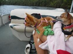 These are our babies relaxing on one of the pontoons we rented which are very nice and their lak