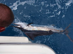 Top Gun Fishing Charters