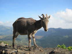 Rajamalai (Eravikulam) National Park