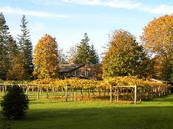 garden with Kiwi Cove Lodge in background