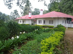 The Tea Sanctuary