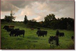 Drover Hill Farm B&B