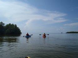 Up a Creek Kayak Tours