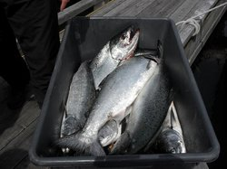 Beasley's Fishing Charters