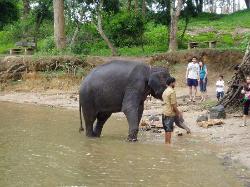 Elephant Safari + Bathing