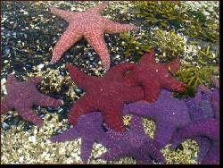 Colourful Sea Stars