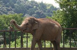 Nihondaira Zoo