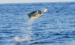 Quepos Fish Adventure Private Day Charters
