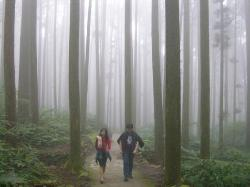 Forest trail, Sitou Forest Recreation Area, Nantou County (28983754)