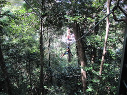 Jungle Tours And Trekking
