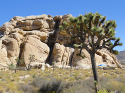 Joshua Tree Ranch