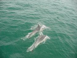 Dolphin Blue Tauranga