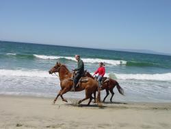 Monterey Bay Equestrian Center