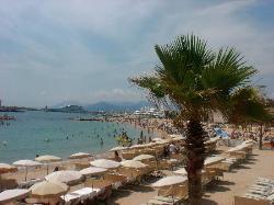 Beach (29425446)