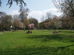 Bunter Garten