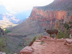 Marvelous Marv's Grand Canyon Tour