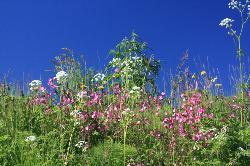 Blumenpracht in Kirkenes (29540640)