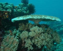 Fish 'n Fins Palau