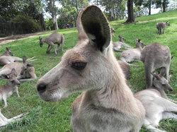 龍柏考拉野生動物園