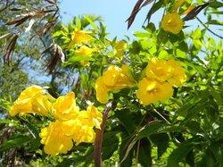 Nassau Botanical Gardens