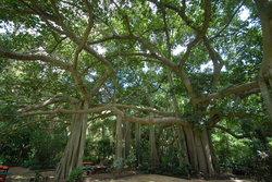 Zoo y Jardines Botánicos de Rockhampton