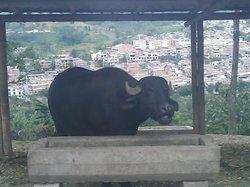 マテカーニャ市立動物園