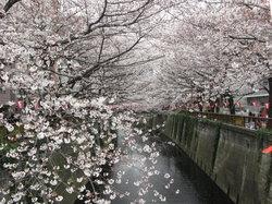 Sungai Meguro
